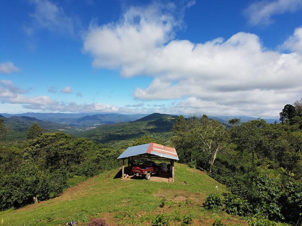 Finca Liquidambar - direct Trade Kaffee aus Honduras